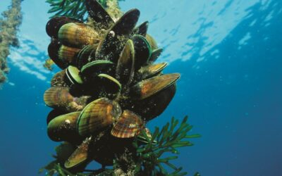 What does Green-lipped mussel do for the body?