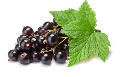 Blackcurrant Leaf: What Is It?